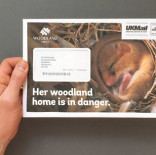 Woodland Trust - February Membership Acquisition Direct Mail