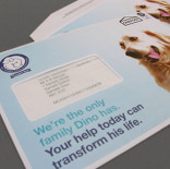 Battersea Dogs & Cats Home - Dino campaign direct mail