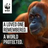WWF - In Memory Giving. Considered.